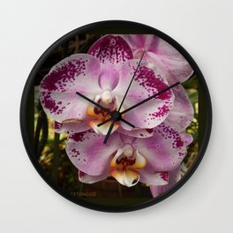 Pink Orchid Blossom from Mexico Wall Clock