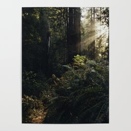 Redwood National and State Parks Poster