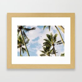 Palm tree in Cairns Framed Art Print