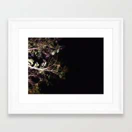 Jacaranda tree, blooming in the night Framed Art Print
