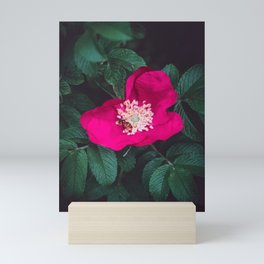 Pink Wild Rose Flower between Green Leaves and a Bee. Mini Art Print