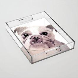 Bully Bull Dog Acrylic Tray