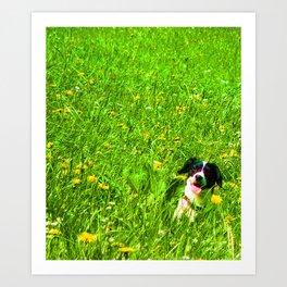 Dog in the Field Art Print