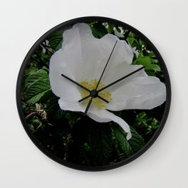 Wild White Rose in Full Bloom Wall Clock
