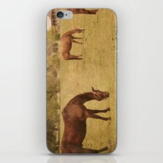 Three Horses Grazing.  Horse Photograph.  Landscape and Nature Photo. Wisconsin iPhone & iPod Skin