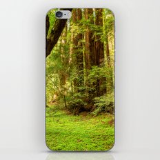 Muir Woods iPhone & iPod Skin