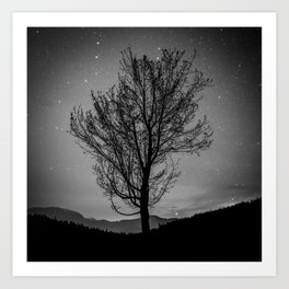 Lost lake solo tree Art Print