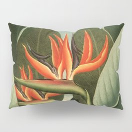 Birds of Paradise : Temple of Flora Pillow Sham