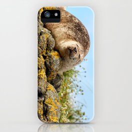 Seal at Dunvegan Castle, Scotland iPhone Case