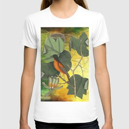 Baltimore Oriole on Tulip Tree, Vintage Natural History and Botanical T-shirt
