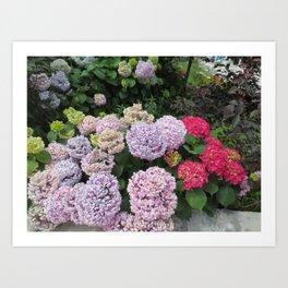 Budva Hydrangeas Art Print