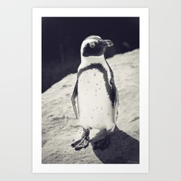 African Penguin - Animal Photography #Society6 Art Print