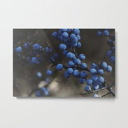 Blueberry Brambles Metal Print