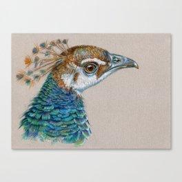 Peacock CC006 Canvas Print
