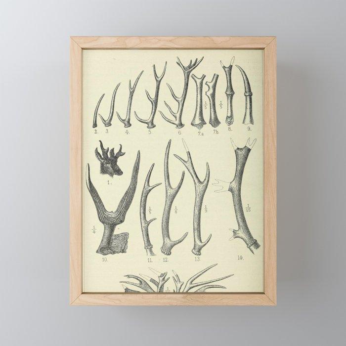 Vintage Antlers Framed Mini Art Print