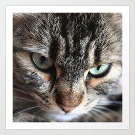 cat square o1 Art Print