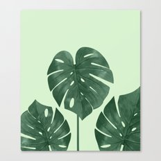 Monstera the nature series Canvas Print