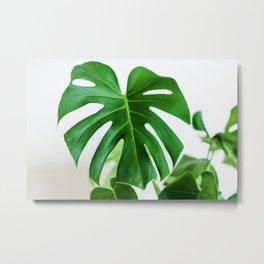 Botanical Green (Color) Metal Print