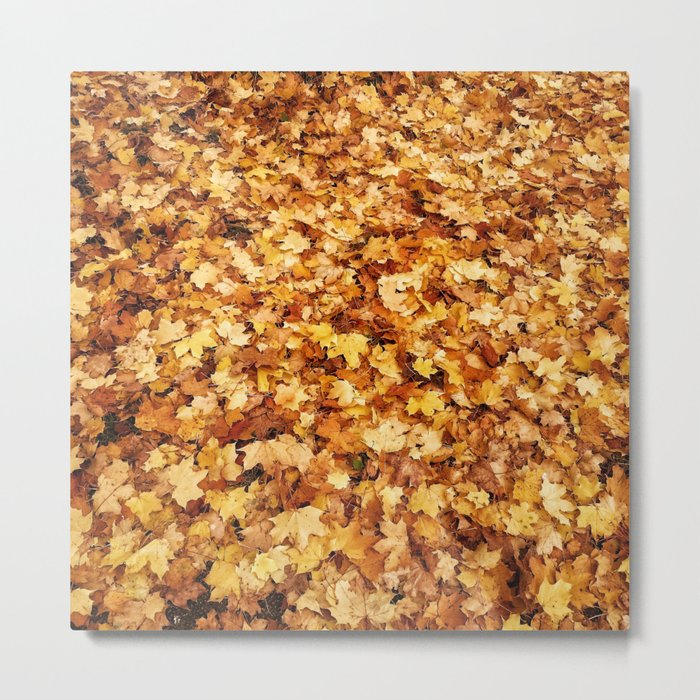 Gold yellow fall maple leaves Metal Print