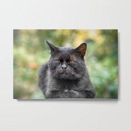 Stray cat (2012-8SPB-WOC) Metal Print