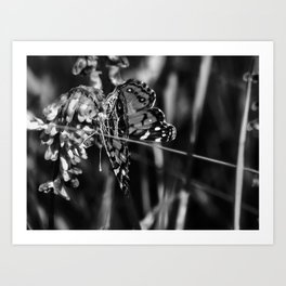 American Lady Butterfly in Black and White Art Print