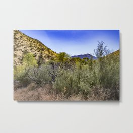 Fresh Green Plants Growing Near Underground Water by the Mountains in the Anza Borrego Desert Metal Print