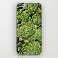 succulent iPhone & iPod Skins featuring Succulent by Cynthia del Rio