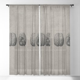Row o' Brains - Engraving - Vintage - Old Black, White & Brown Sheer Curtain