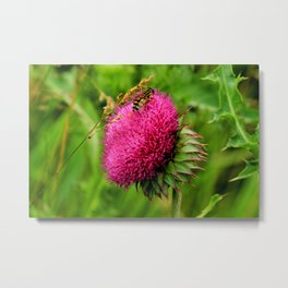 The thistle and a fly Metal Print