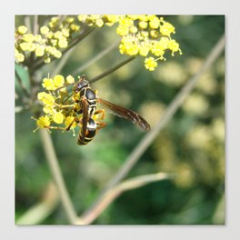 Fennel and Insect Canvas Print