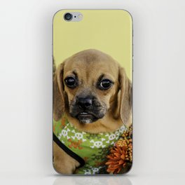 Valentina the Puggle Puppy Ready for Autumn iPhone Skin