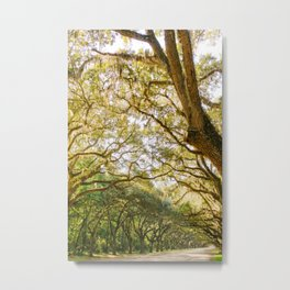 Savannah Wormsloe Historic Site III Metal Print