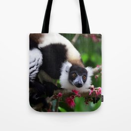 Black and White Ruffed Lemur, Madagascar Tote Bag
