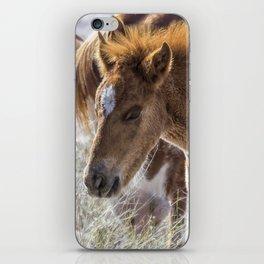 Salt River Sleepy Foal iPhone Skin