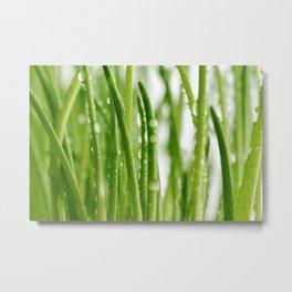 Green gras 03 Metal Print