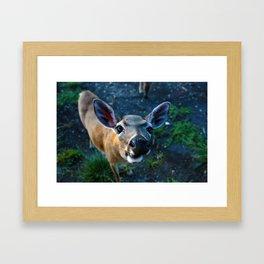 Key Deer Framed Art Print