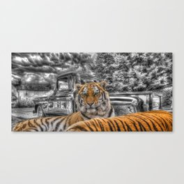chevy pick up and tiger. Canvas Print