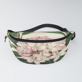 Rhododendron maximum 'Great laurel' Fanny Pack