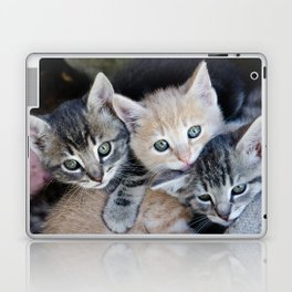Kittens, 3 balls of tenderness Laptop & iPad Skin