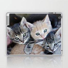 Kittens, 3 balls of tenderness Laptop & iPad Skin