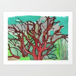 Manzanita Art Print