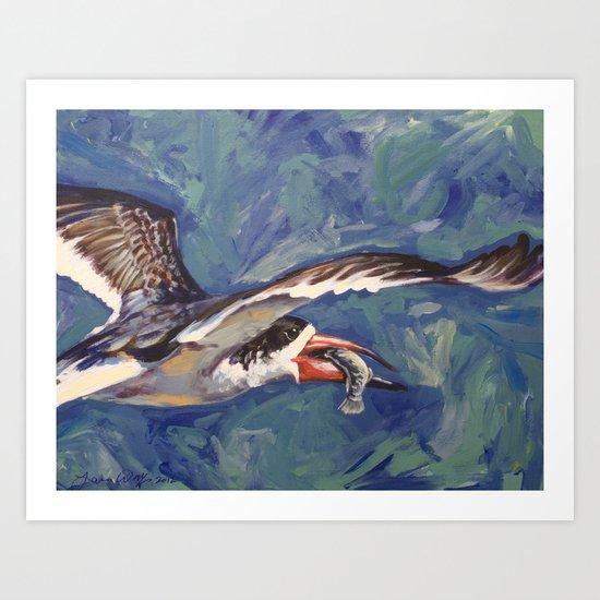 Mark's Oystercatcher Art Print
