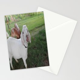 Buck Love Stationery Cards