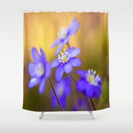 Spring Wildflowers, Beautiful Hepatica in the forest on a sunny and colorful background Shower Curtain