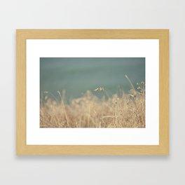 Goat Beach Grass   Framed Art Print