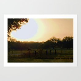 horse graze. Art Print