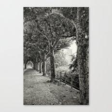 Sycamore 496 Canvas Print