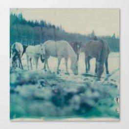 Albertan Winter Canvas Print