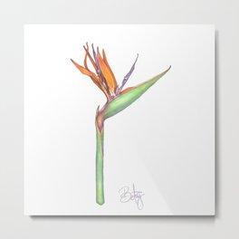 Birds of Paradise flower, Strelitzia Reginea. Metal Print
