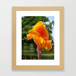 Cannas beautiful plant a row of beautiful flower Framed Art Print